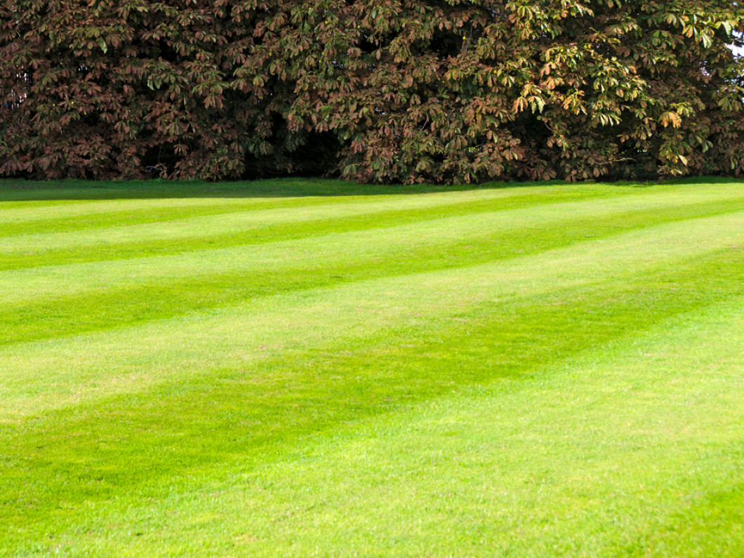 Lawn Care in Nashville, Texarkana, AR, and surrounding areas